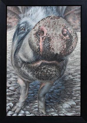 'Pietrain Boar'