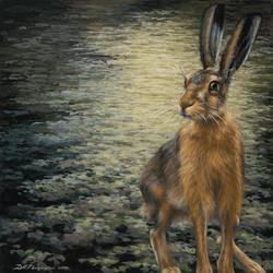 'Sir Hare'