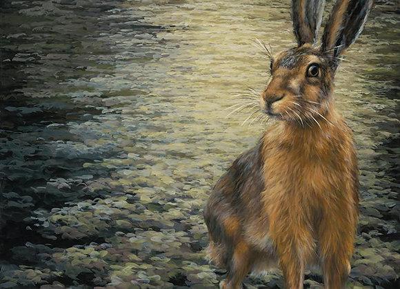 Sir Hare