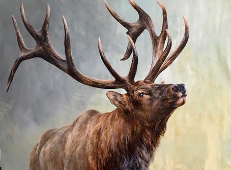 """""""Rising Bull Elk"""""""