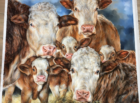 "Finished Grand Project ""Simmental's Family Love""60"" x 60"""
