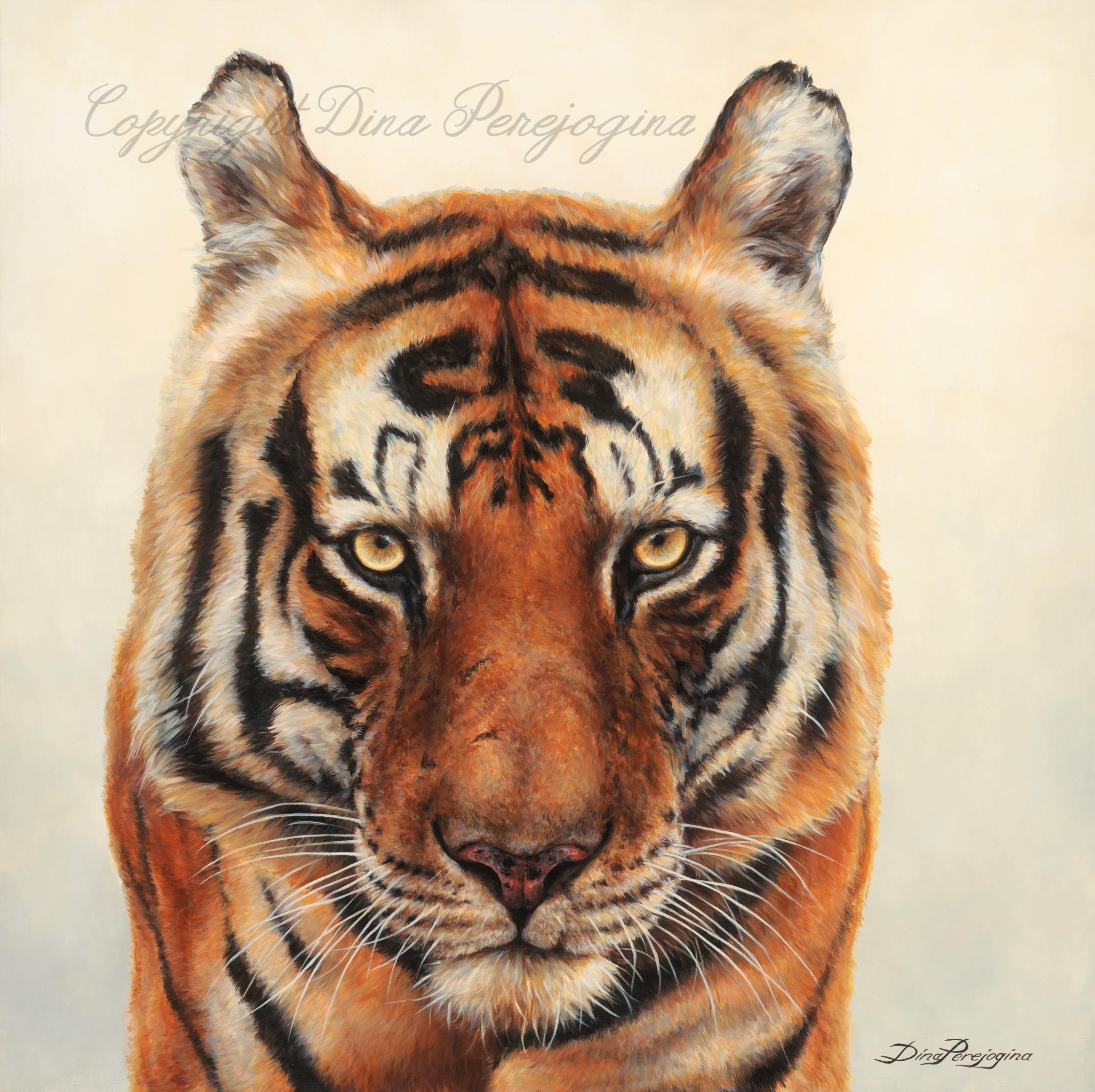 'Munna Tiger'