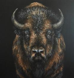 'Bison Presence'