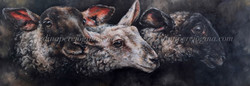'Lambing Season'