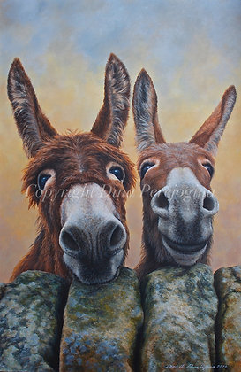 'Hee and Haw'
