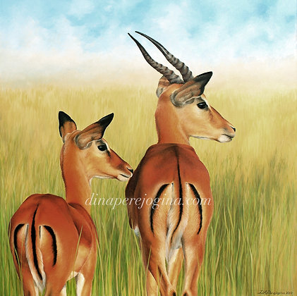 'Antelope Buck and Doe'
