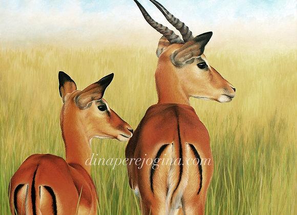 Antelope Buck and Doe
