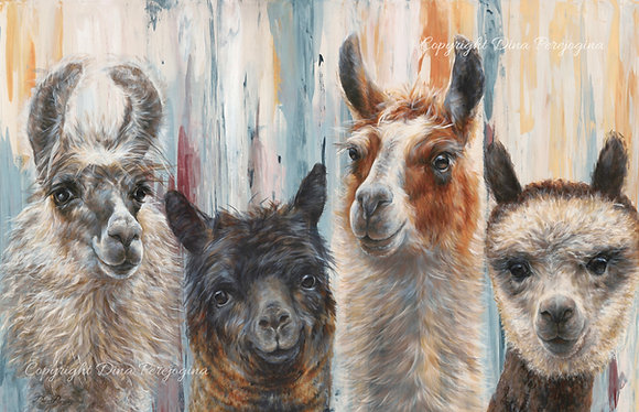 'Llamas and Alpaca'