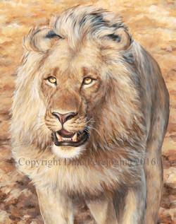 'Lion Walk'
