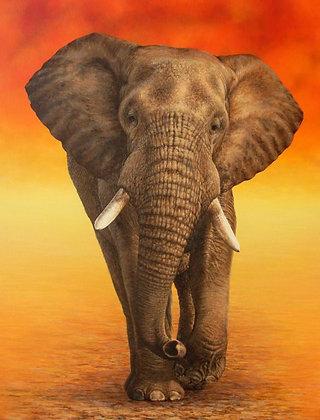 'Kruger Bull Elephant'