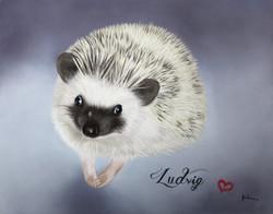 'Ludvig'