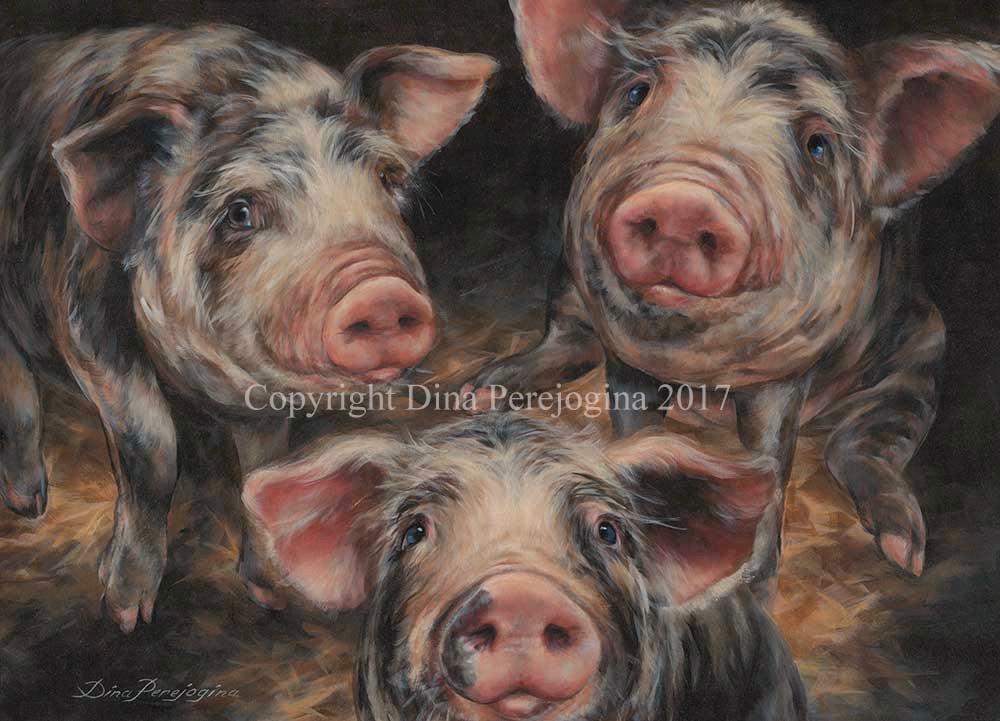 'Piggy Porky'