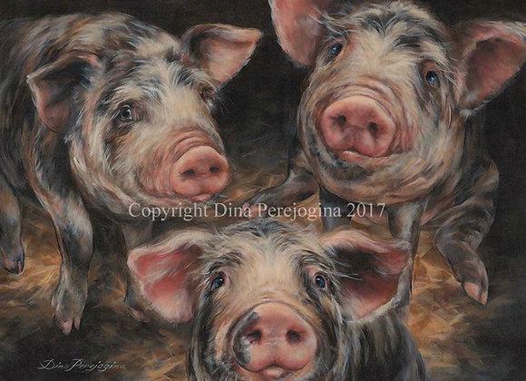 Piggy Porky