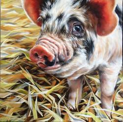 'Piggy Boo'