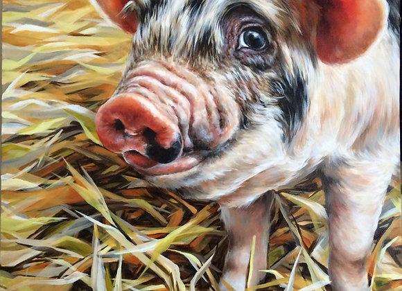 Piggy Boo