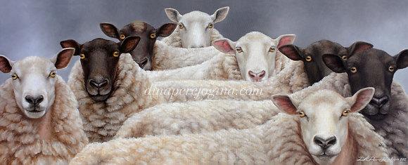 'Mob of Sheep'