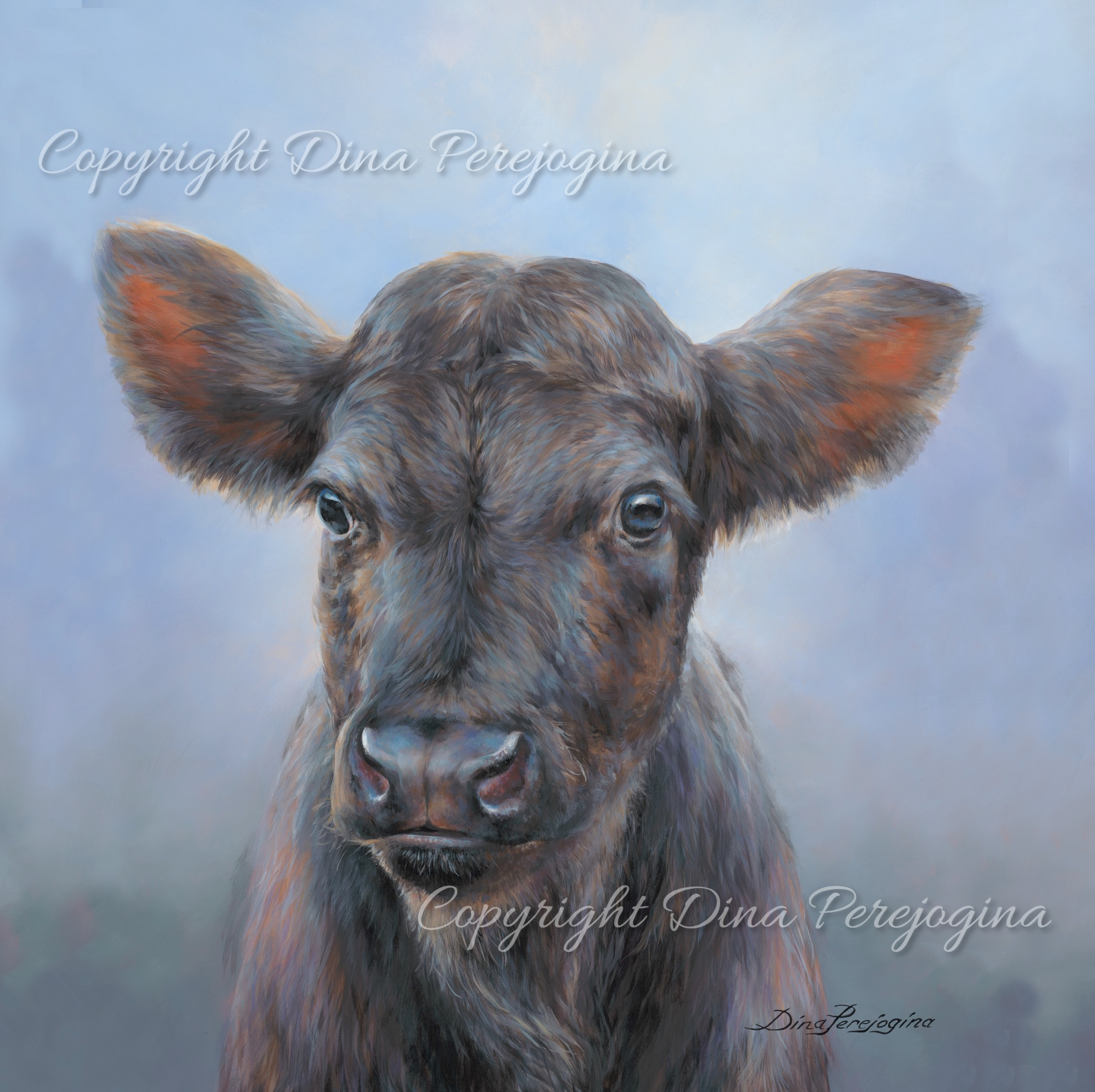 Aberdeen Angus Junior