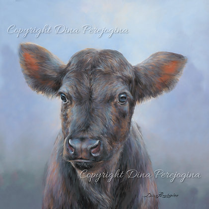 'Aberdeen Angus Junior'