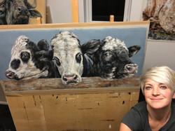'Friesian Cross Devon Cows'