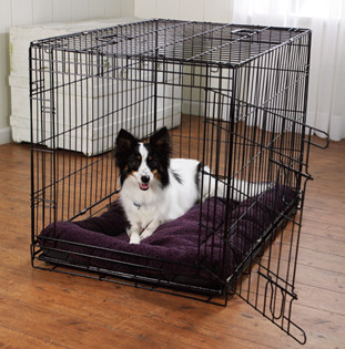 Is it cruel to lock my dog in a crate or cage?