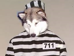 doglaw.png