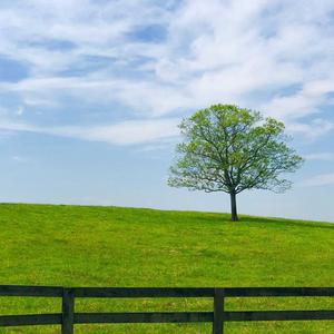 A Peaceful Hill