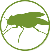 insect-icon.png