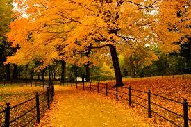 leaves.jfif
