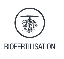 Biofertilisation.png