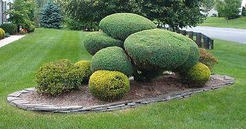 shrub2.jpg