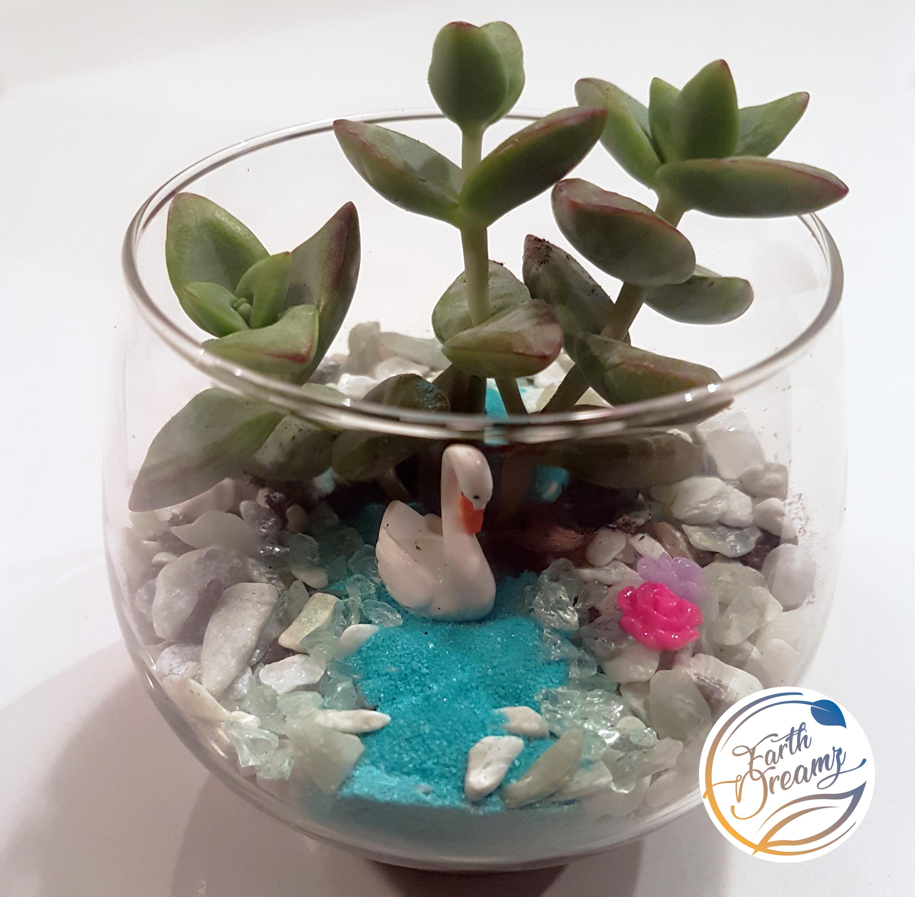 Miniture Terrariums