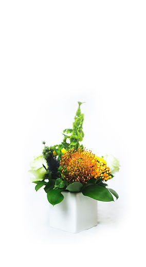 yellow-pin-cushion-flower