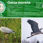 09_garzamorena.jpg