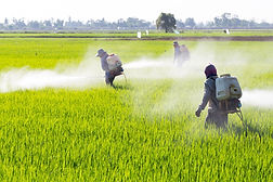 bigstock-farmer-spraying-pesticide-in-t-