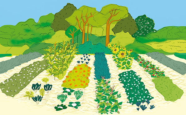 agroecologia-souza.jpg