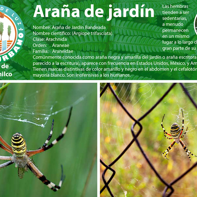 06_arañabandeada.jpg