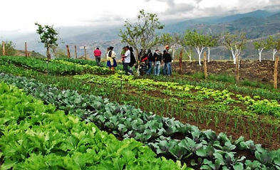 agroecología.jpg
