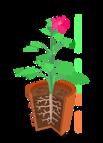 Anatomia_de_un_planta_-_lfn.png