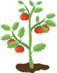 Tomato Plant-305520.png