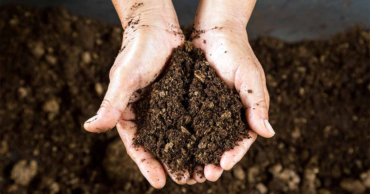 Peat-Moss-Reduces-Soil-Density.jpg