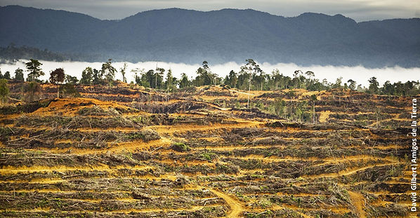 deforestacion-1.jpg