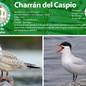 11_charran.jpg