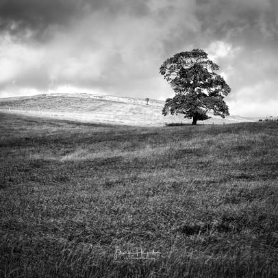Lone Tree, North Yorkshire