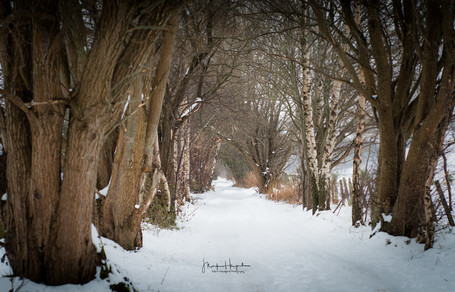 Rothes wooded path - Speyside