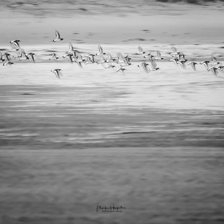 Monifieth birds