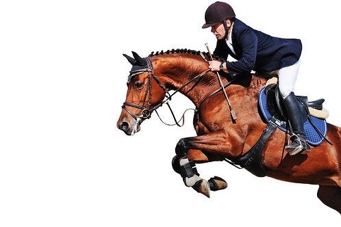 Equine Joint Supplement Premium Horse Joint Supplement