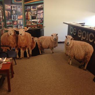 1 Sheep 2 Sheep 3 Sheep!