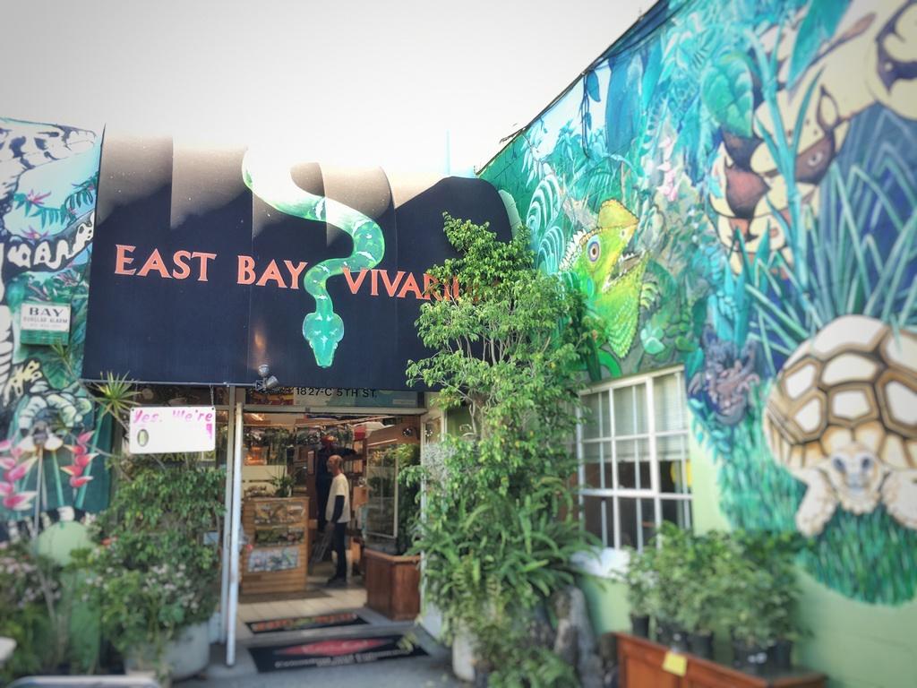 Reptile Store East Bay | United States | East Bay Vivarium