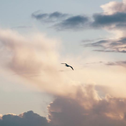 animal-avian-backlit-2147454.jpg