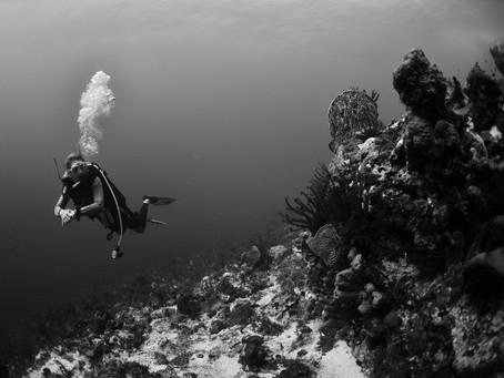 Explorer les fonds sous-marin en Martinique